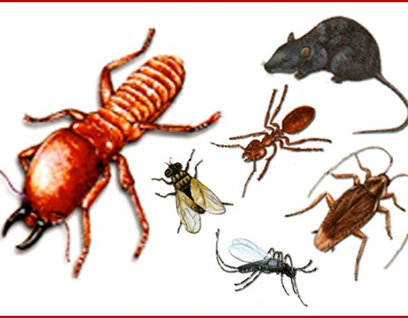 มด แมลงสาบกวนใจคุณอยู่หรือเปล่า